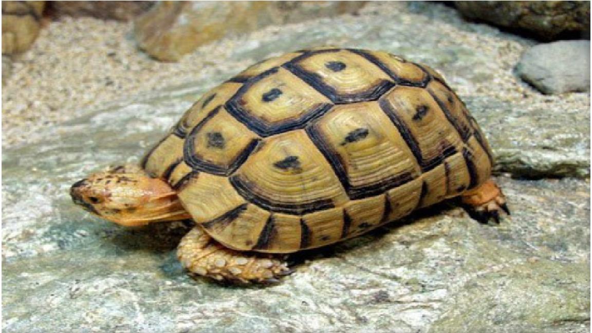 Mơ thấy rùa đánh con gì
