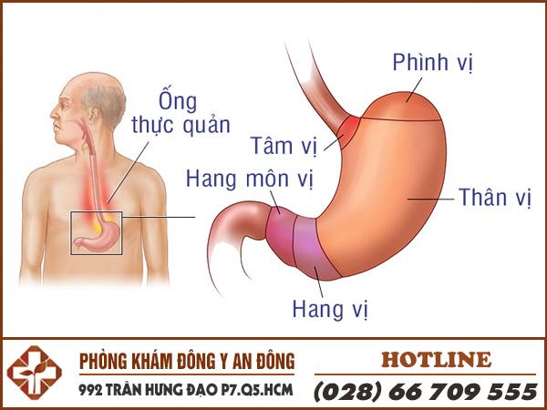 Vị trí đau dạ dày phổ biến.