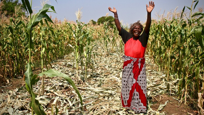IFAD launches $500M fund to channel climate finance to smallholders