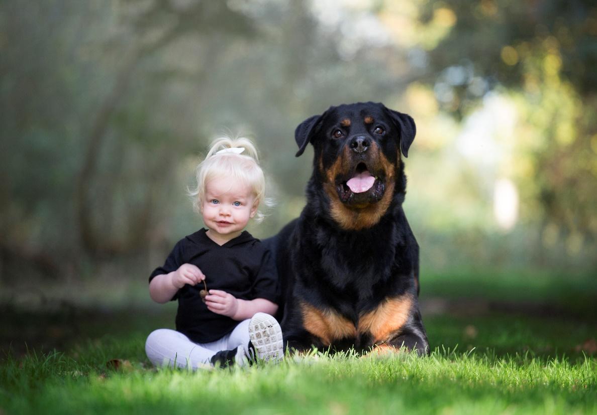 Afbeelding met hond, gras, buiten, zitten  Automatisch gegenereerde beschrijving