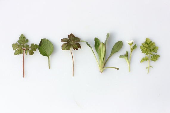 What Are the Best Herbs to Plant Together? 4
