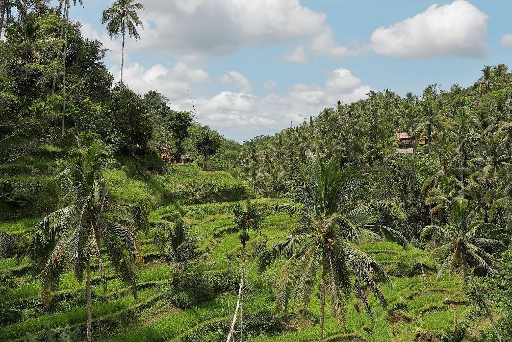 family vacation in Ubud Bali