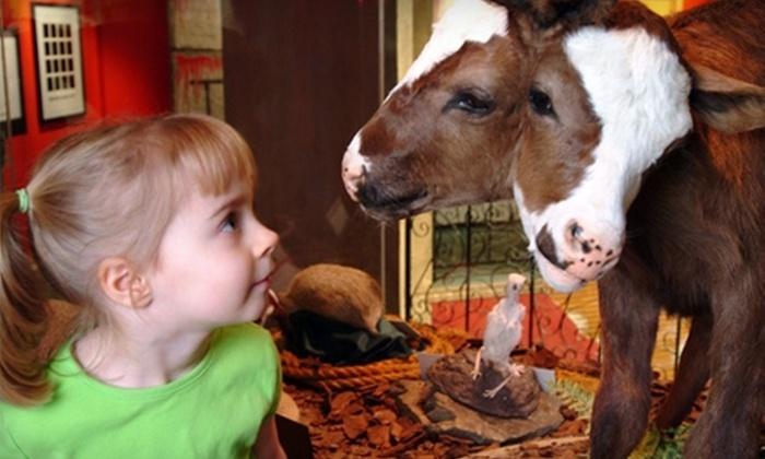 Criança olhando para um dos animais empalhados do Ripley's Believe it or Not