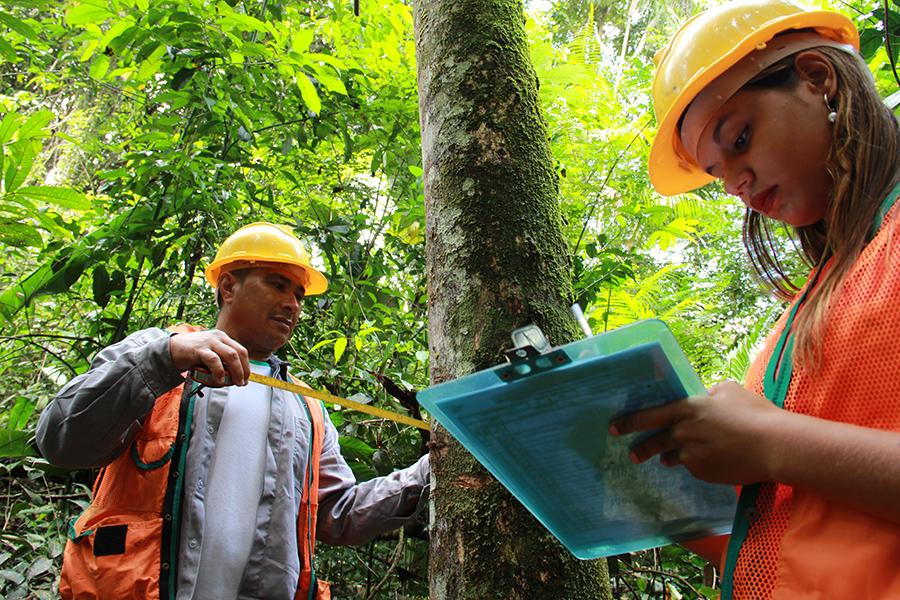 Técnicos da Embrapa desenvolveram parâmetros de manejo florestal que garantem mais renda e sustentabilidade. (Fonte: Embrapa/Divulgação)