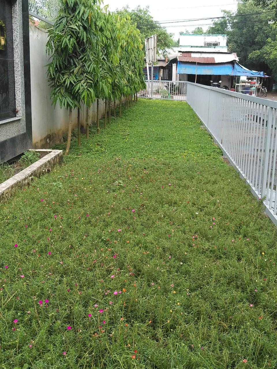 Công ty còn nhận dịch vụ chăm sóc tỉa cỏ