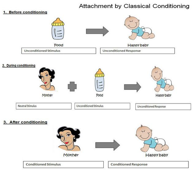 Attachment Theory   Simply Psychology   Attachment theory, Social learning  theory, Classical conditioning psychology