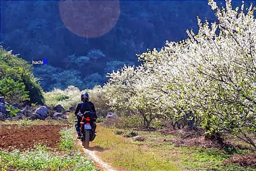 Hành trình ghé thăm bản Pa Phách Mộc Châu