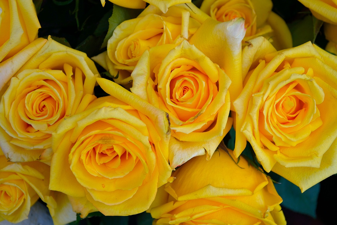 Guide To Gifting Roses By Colour And Meaning Fresh Flowers