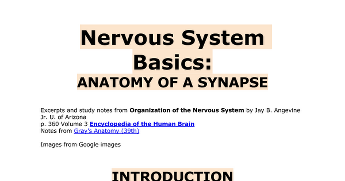 Nervous system basics: Anatomy of a synapse - Google Docs