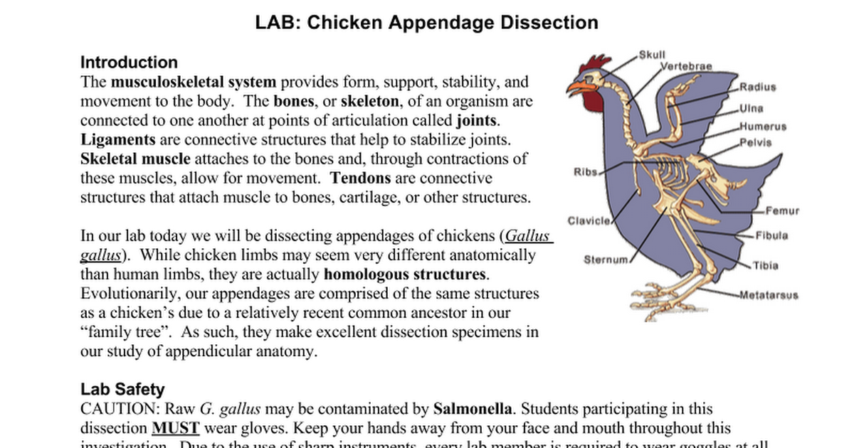 Lab 6 chicken bone and joint dissection Homework Academic Service ...