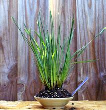Voici mes plantes d'accompagnements 9qgYN9IOQTDcNvKXDA6eTvcbkd2p0l4Jf3_YY5s2mA=w213-h221-p-no