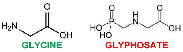 Image result for glycine glyphosate