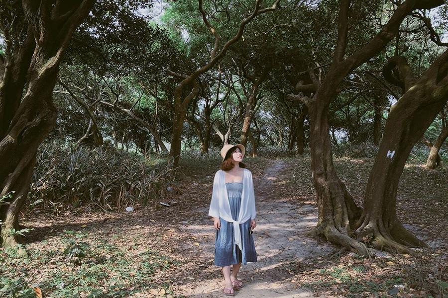 rừng trâm nguyên sinh trên đảo Quan Lạn