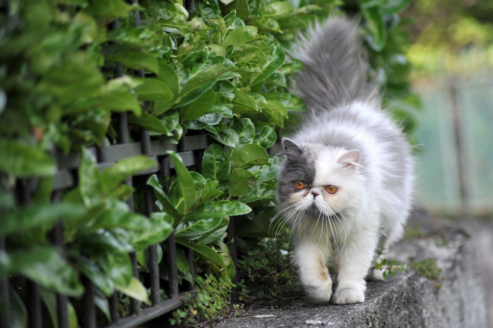 Indoor vs. Outdoor Cats: Should You Let Your Kitty Roam?   Daily Paws
