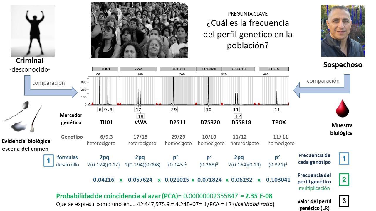 C:\Users\DR. HECTOR RANGEL\OneDrive\Documentos\Articulos\Articulo-GENETICA FORENSE-Alemania\HID MX.jpg