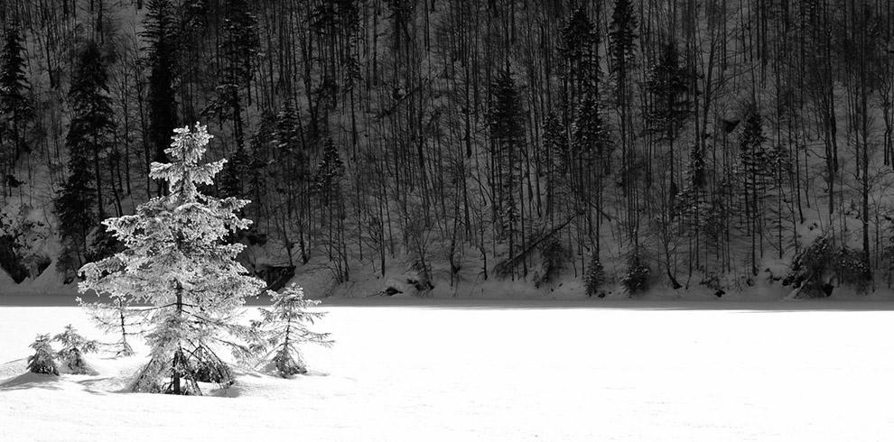A snowy forest with trees  Description automatically generated with low confidence