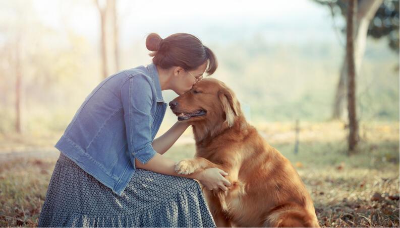 cuidadora de perros golden retriever londres