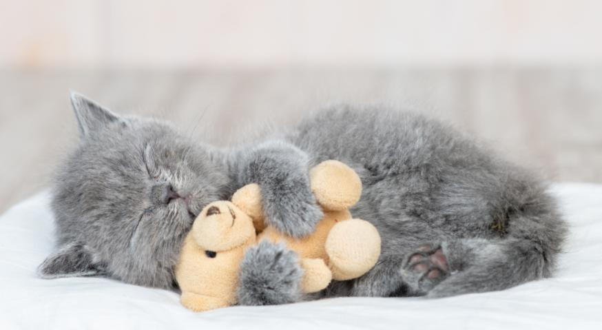 cute kitten hugging toy