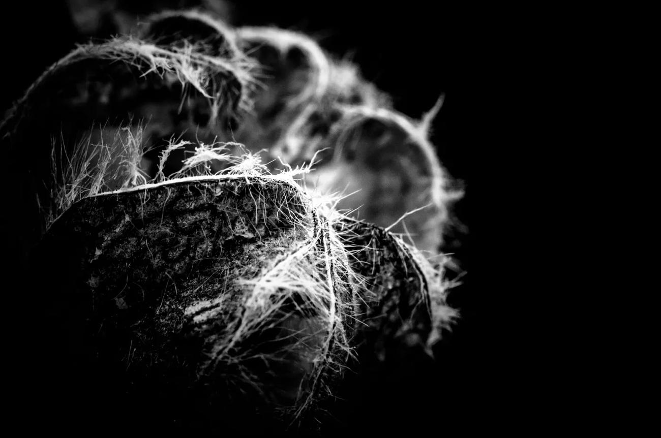 甲殻類 が含まれている画像  自動的に生成された説明