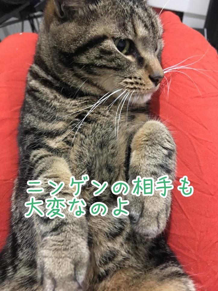 ストレス発散、運動不足を解消!あらゆる手でネコを動かす方法