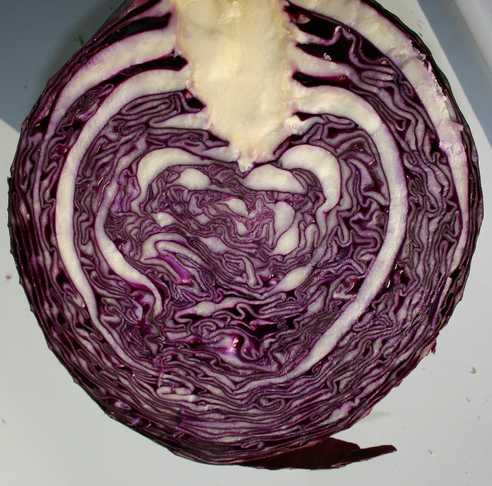 A head of purple cabbage sliced in half.