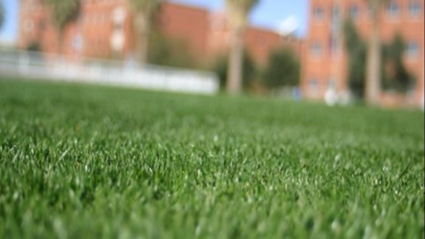 HOW LONG TO STAY OFF NEW GRASS SEED