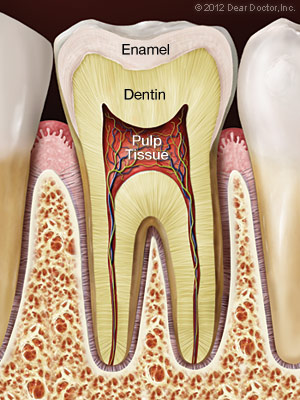 Inside of a healthy tooth