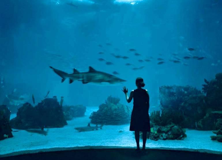 """Résultat de recherche d'images pour """"Lisbon oceanarium"""""""