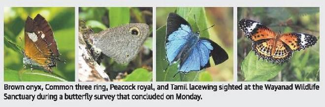 Image result for The Western Ghats still home to a rainbow of butterflies