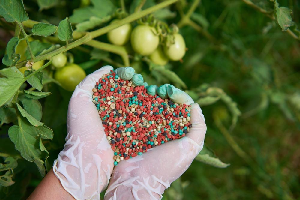mão segurando fertilizantes