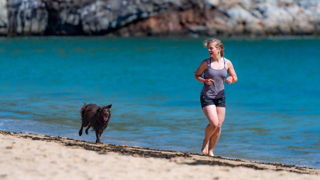 8 Things You Can Do to Help an Old Dog That is Suddenly Hyperactive | exercise them