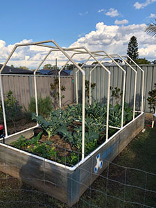 Vegetable garden with a tall frame in construction built with 45 degree, tee and elbow PVC connectors from Klever Cages protection your harvest