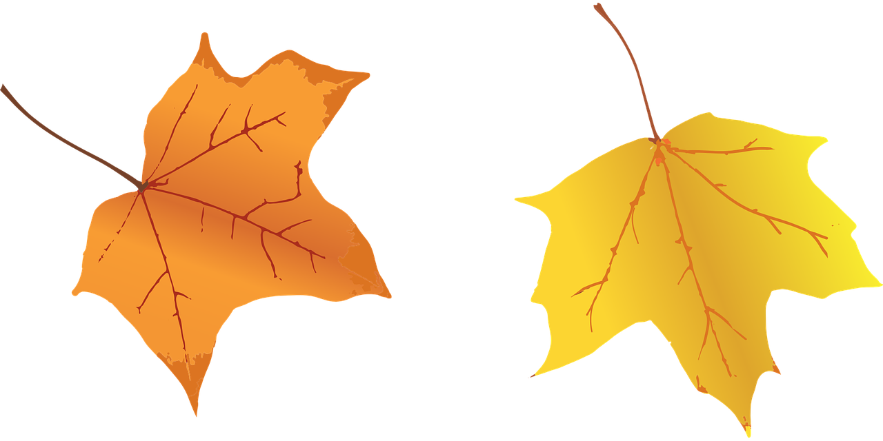 Opis: Leaves Fall Autumn - Free vector graphic on Pixabay