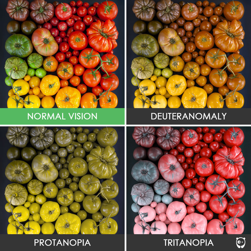 A frame containing the same image 4 times, but one of them is how the normal vision works, and the other 3 represent how they are perceived by people with common types of color blindness