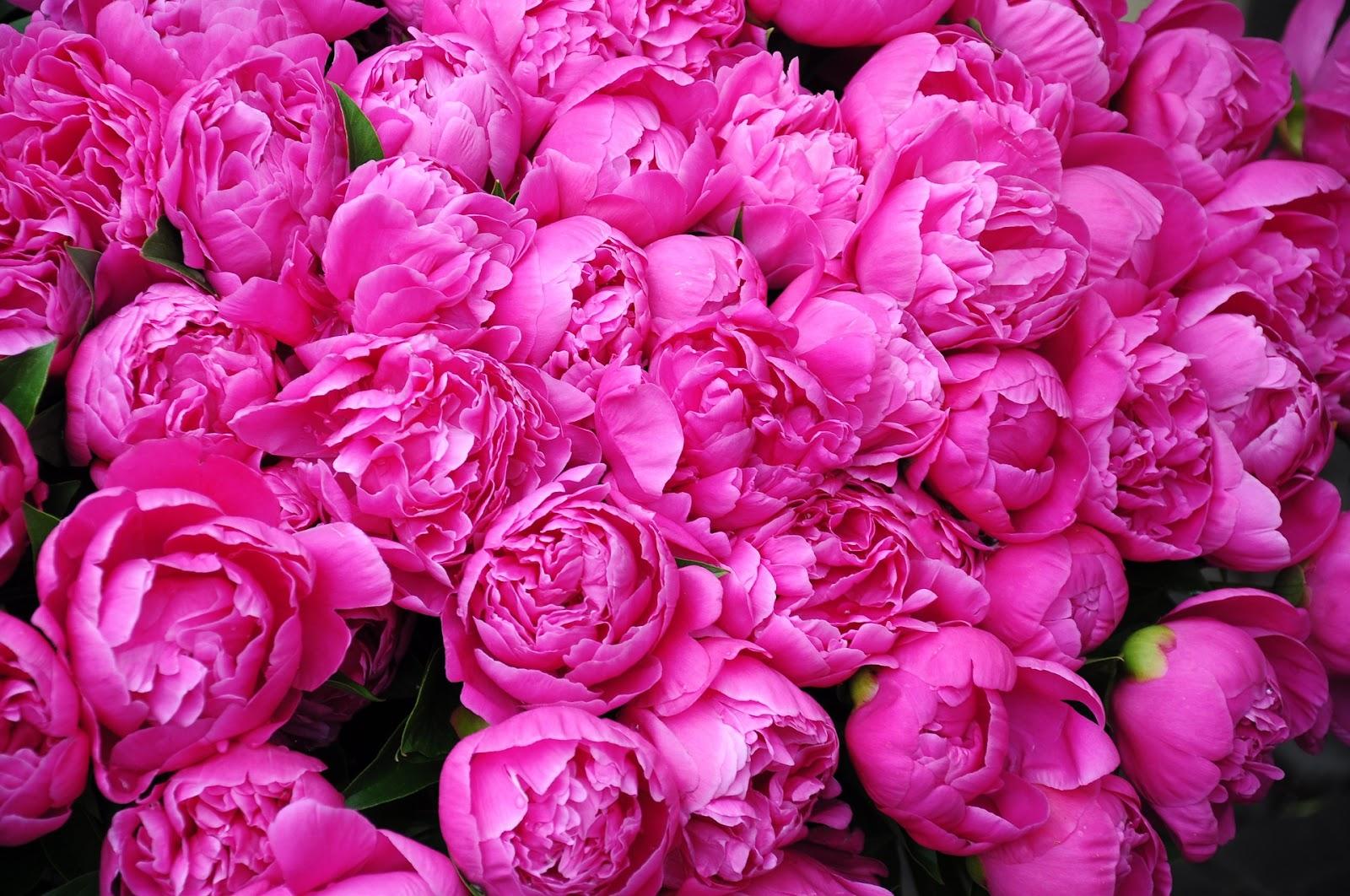 פרחים וורודים