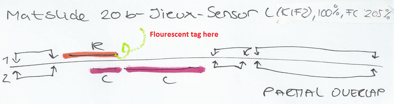 Sensor C flourescent tagpng