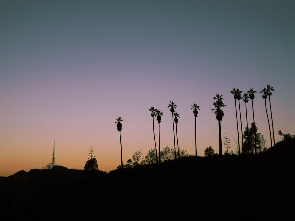 an image of palm trees
