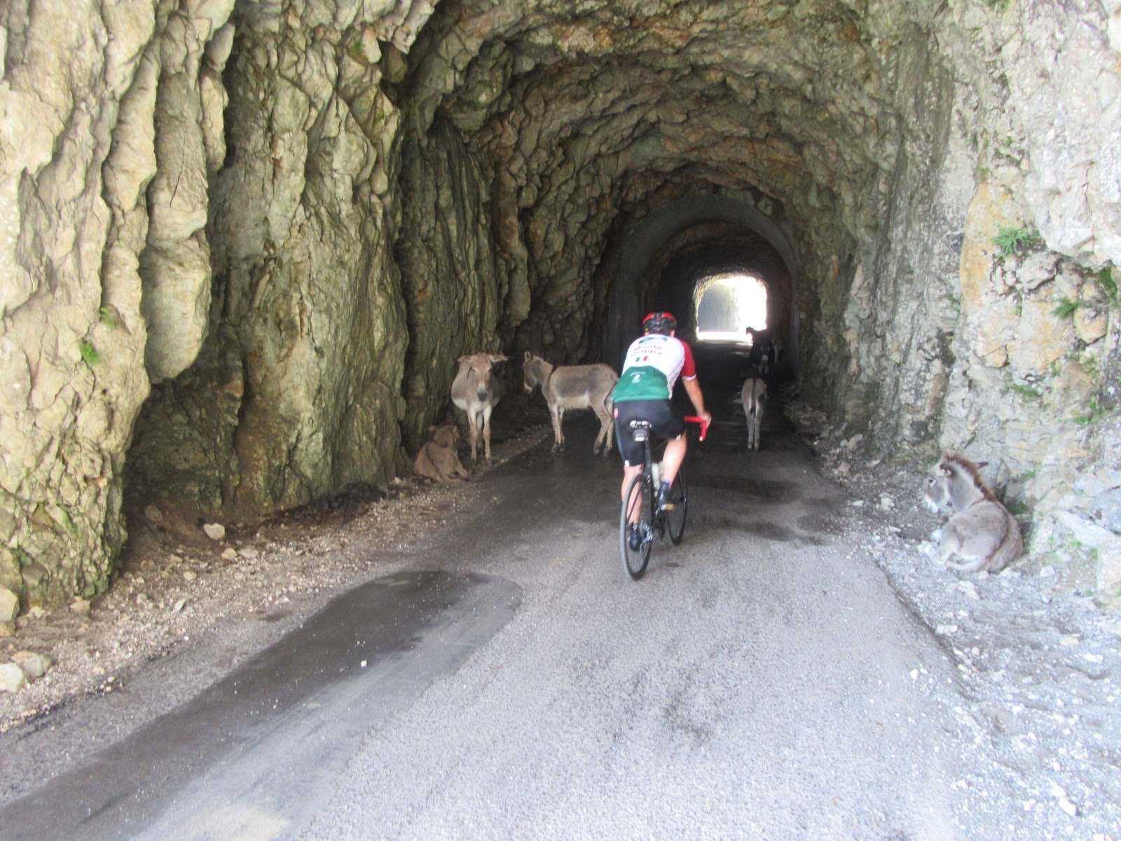 Cycling Monte Grappa from Possagno  - cyclist riding through tunnel near mules