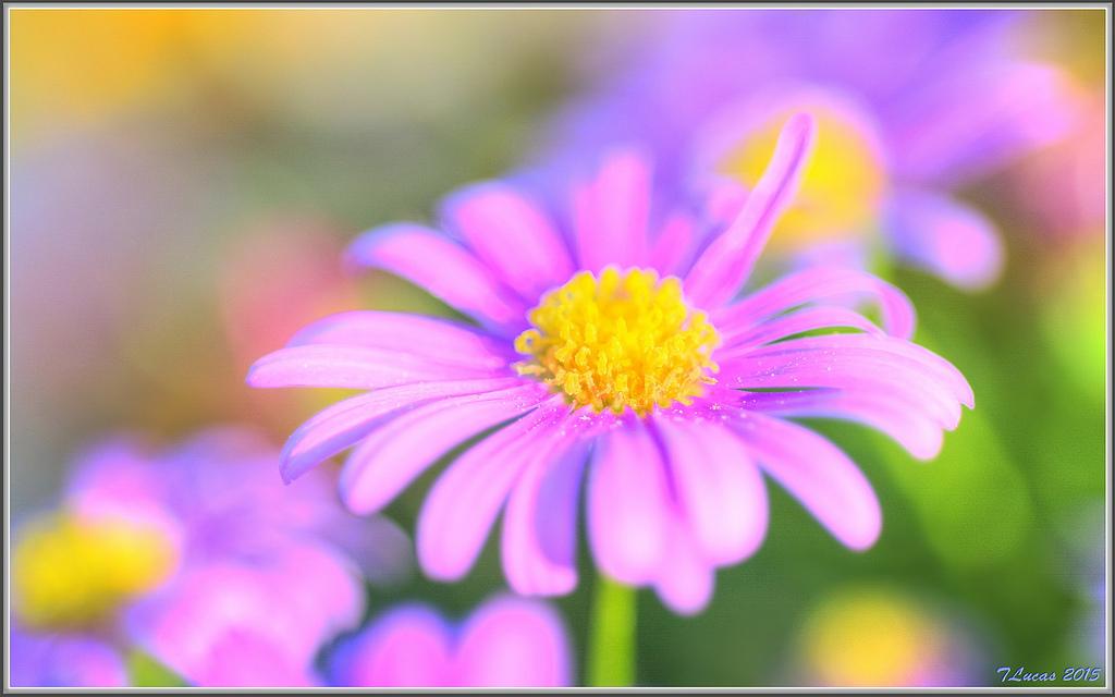 by tdlucas5000 Spring is here!