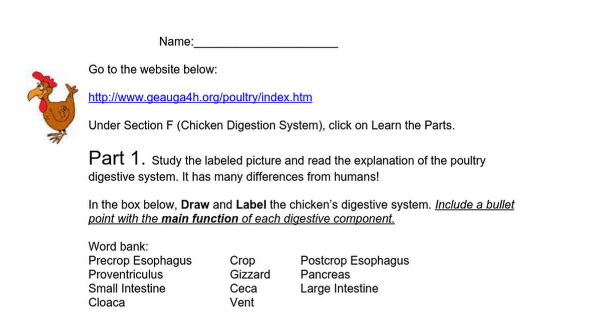 Poultry Digestive System Webquestcx Google Docs