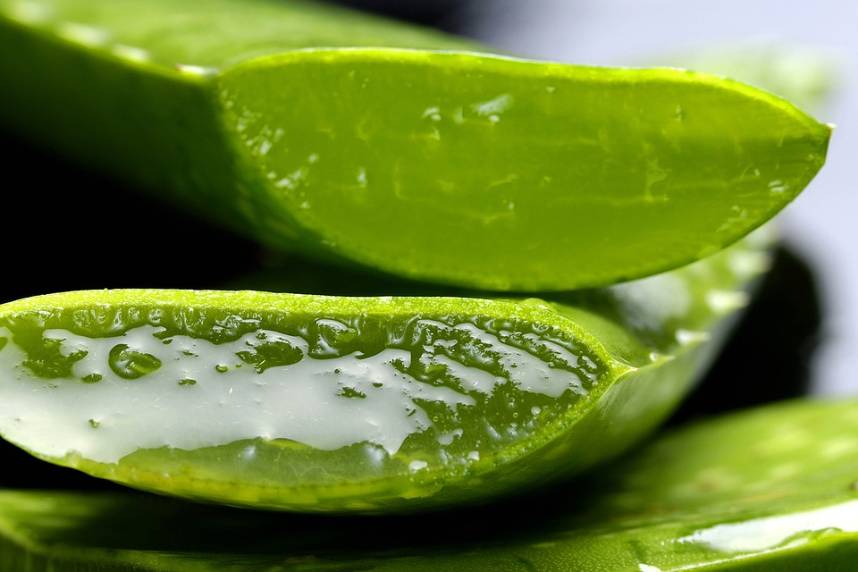 Sliced sections of aloe vera leaf with the fresh gel visible.