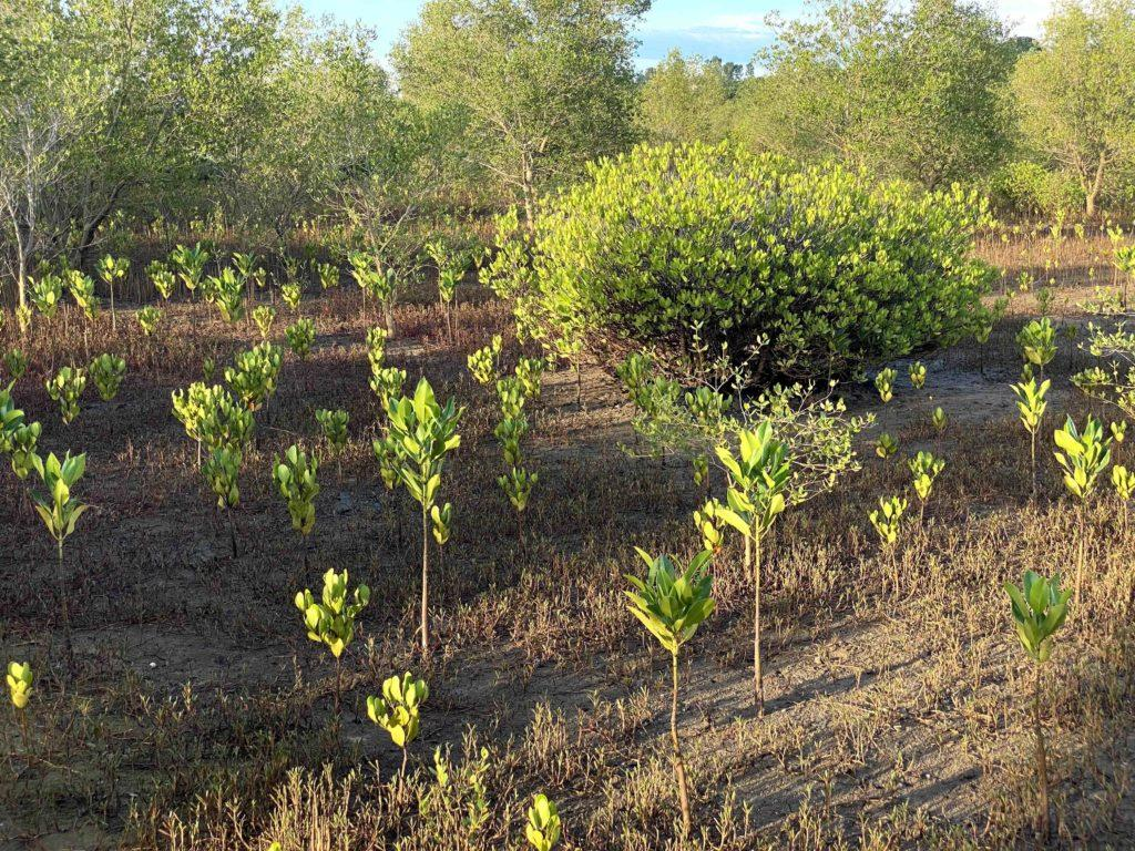 Madagascar Mangroves