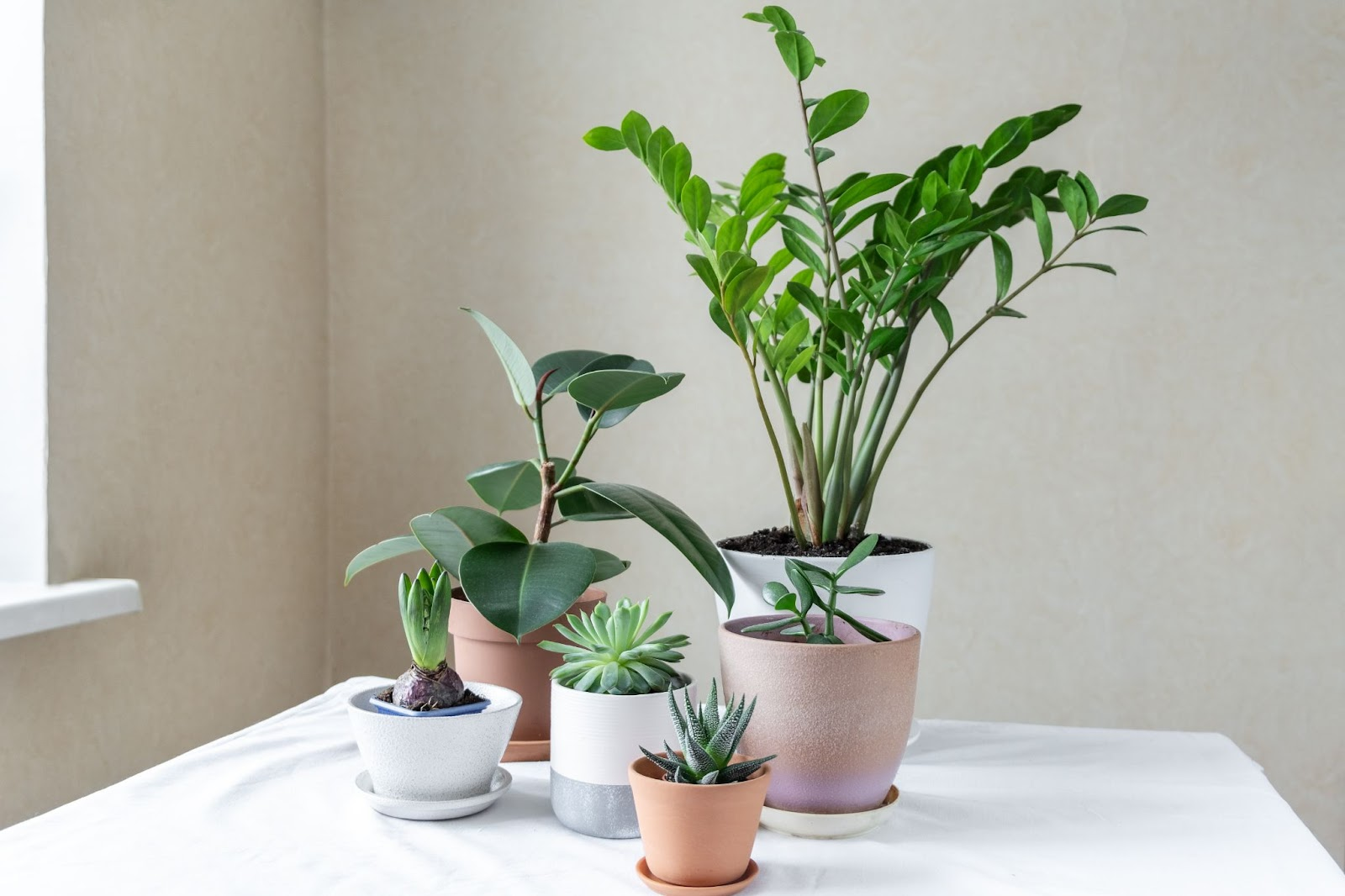 Image of varying sizes of pots and plants sitting on a white table.