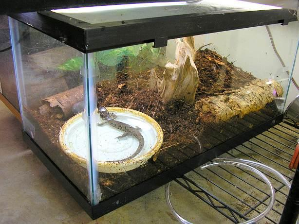 Resulta ng larawan para sa tiger salamanders housing