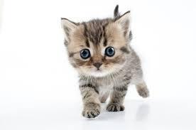 Kotek Zdjęcia - zdjęcia, kotki stockowe fotografie i obrazy ...