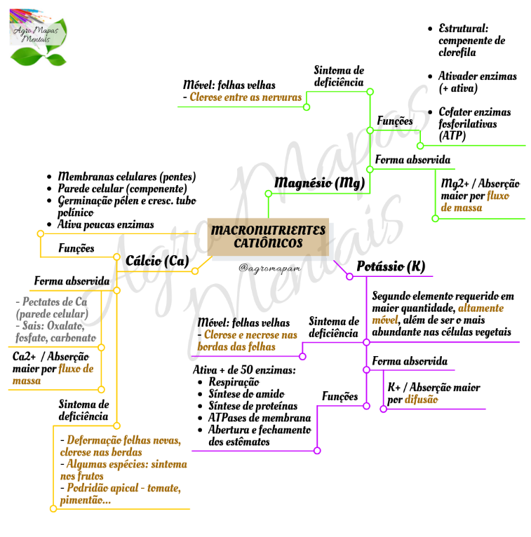 Mapa Mental: macronutrientes Catiônicos