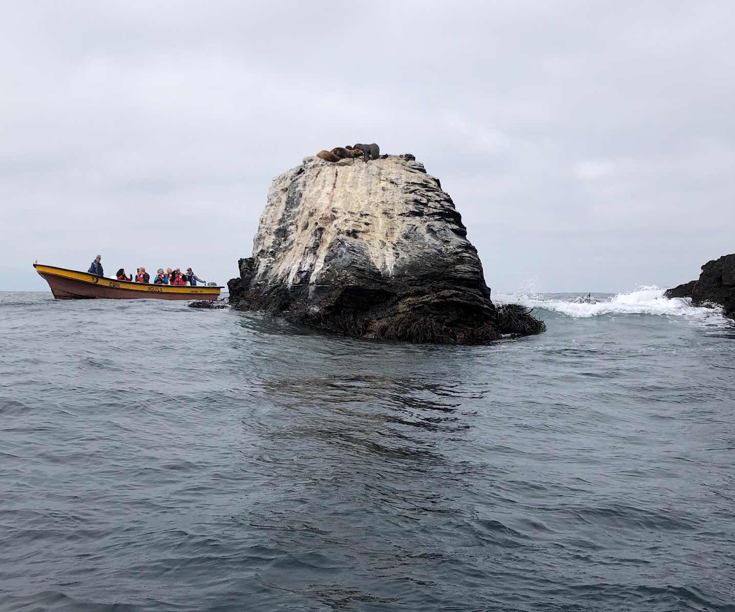 Offshore rock near a Isla Damas with sea lions sunning themselves on the top (Source: Palmia Observatory)