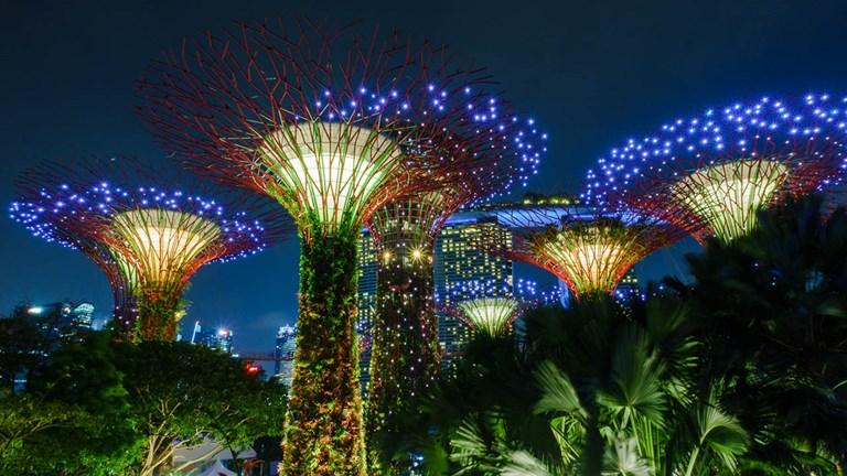 """The """"Supertrees"""" in Singapore's Gardens by the Bay harness solar power and encompass vertical gardens."""