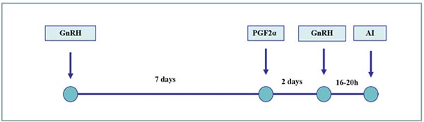 Ovsynch program: estrus synchronization scheme based on manipulating follicular growth and time of ovulation. Usually, only one fixed time AI is done because ovulation is synchronized in a short period of time by the 2nd GnRH injection.