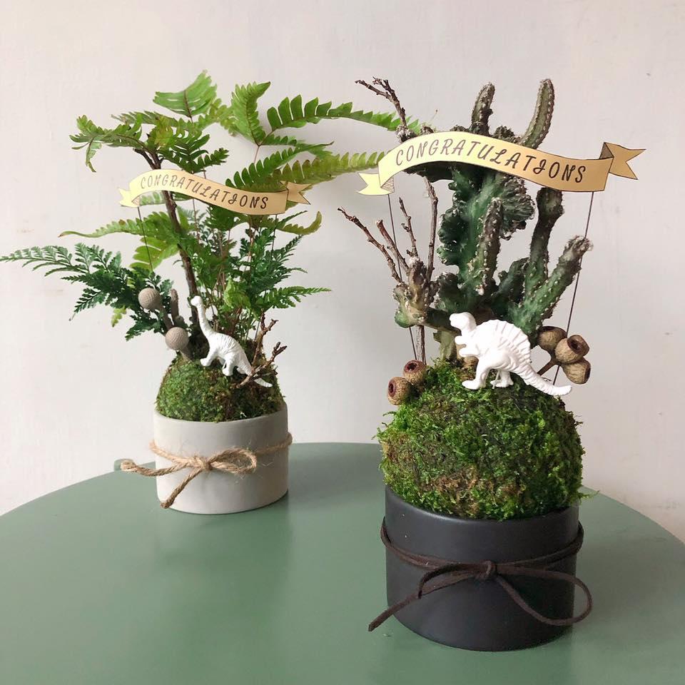 苔球陳列方式-盆栽樣式